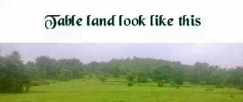 100 Acre Agricultural Land for Sale in lanjekar