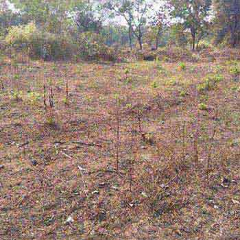 Agriculture Land Available For Sale