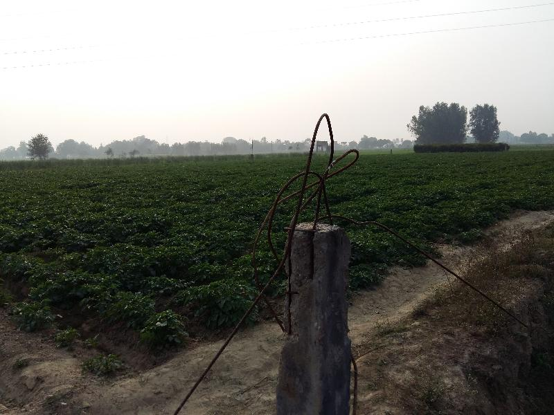 Farm Land for Sale in Allahabad