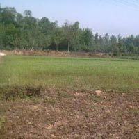 Farm Land for Sale in Bardoli