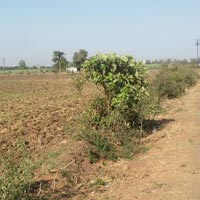 Residential Land / Plot for Sale in Kadodara
