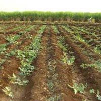 Farm Land for Sale in Surat