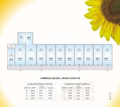 Sunflower Phase II