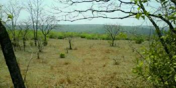 100 Acre Agricultural Land dealing  in lanja Rajapur Rameshwar  girye  MIDC  are