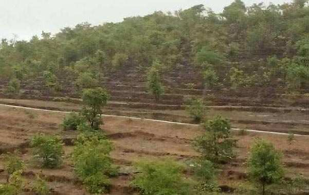 Rajapur Refinery farmers land  dealar  - RAMIZ
