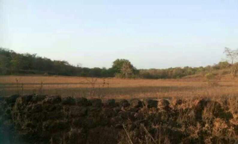Agriculture Farm LAND SALE