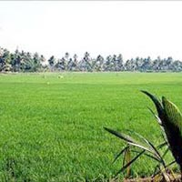 Agricultural/Farm Land for Sale in Kol South, Kolkata
