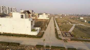 500 sq.yrd plot in Mohali