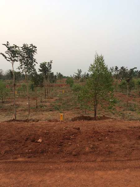 Investment Open Plots
