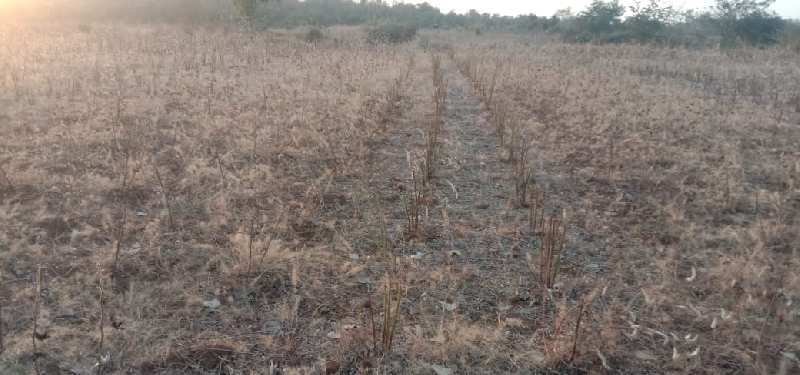 Land for sale in mohap budla 23 Acer