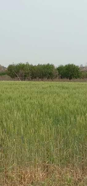 Land for sale in mohap telgaon road