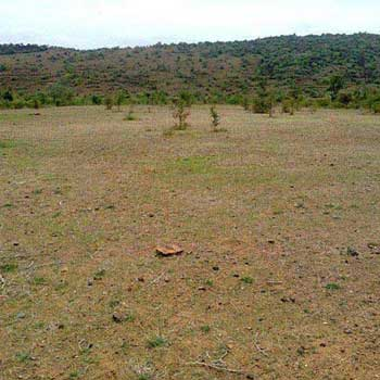 Residential Plot for Sale in Sector 65, Faridabad