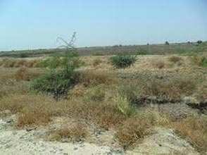 Industrial Land for Sale in Por, Vadodara