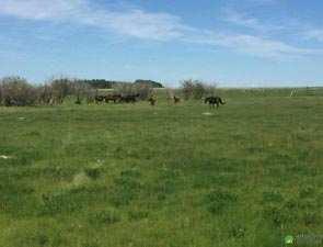 Farm Land for Sale in Por, Vadodara