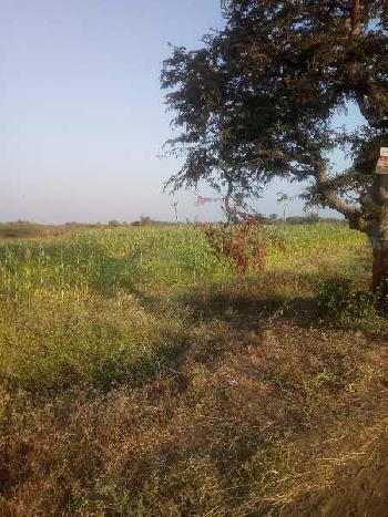 1.5 ACRES AGRICULTURE LAND FOR SALE IN BHARUCH.