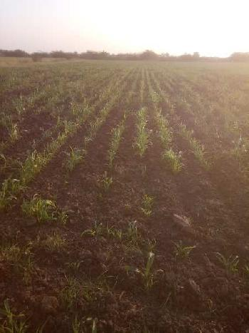 3 ACRES AGRICULTURE LAND FOR SALE IN BHARUCH.