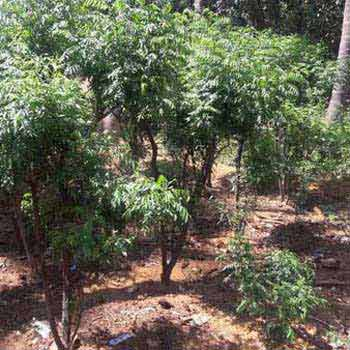 Agriculture Land For Sale In TENKASI