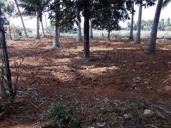 Agricultural/Farm Land for Sale in Vikramasingapuram, Tirunelveli