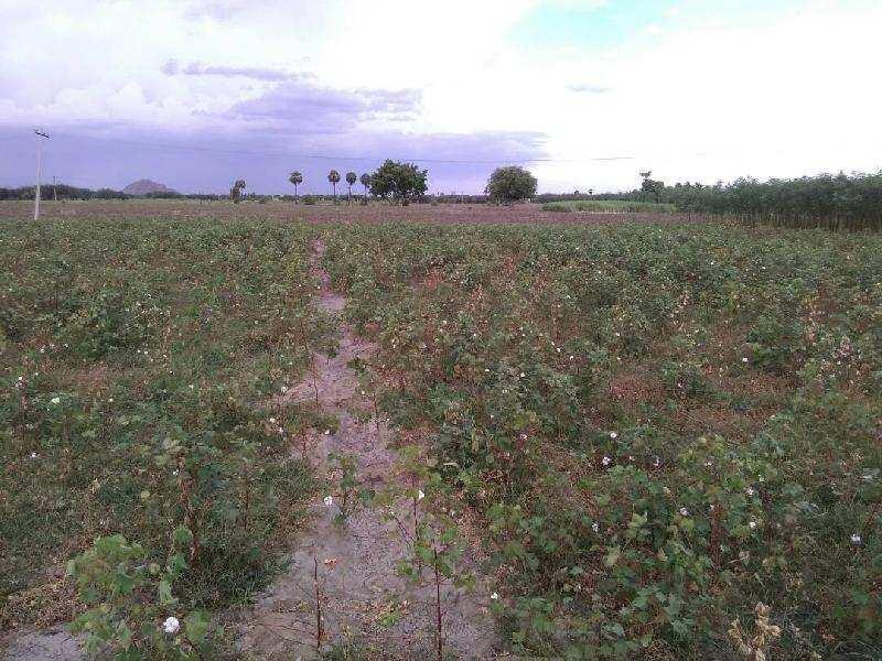 Agricultural/Farm Land for Sale in Kadayanallur, Tirunelveli