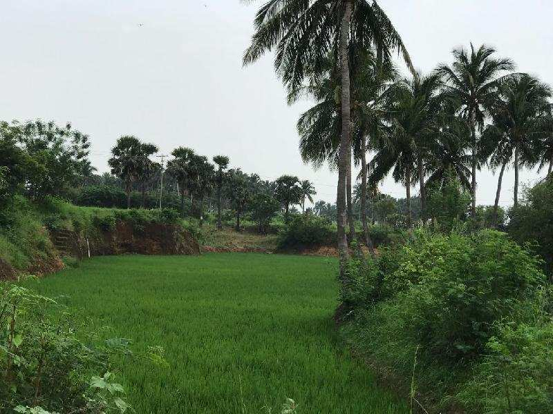 Agricultural/Farm Land for Sale in Puliyankudi, Tirunelveli