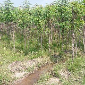 Agricultural/Farm Land for Sale in Tirunelveli