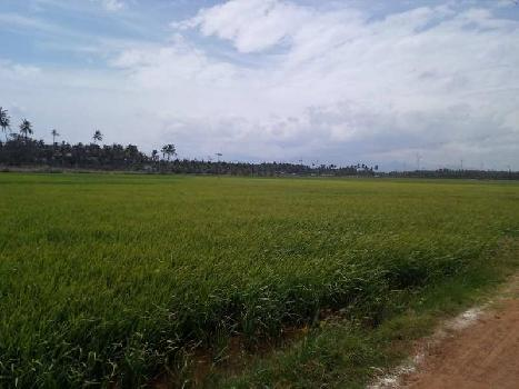Agricultural/Farm Land for Sale in Achampudur, Tirunelveli