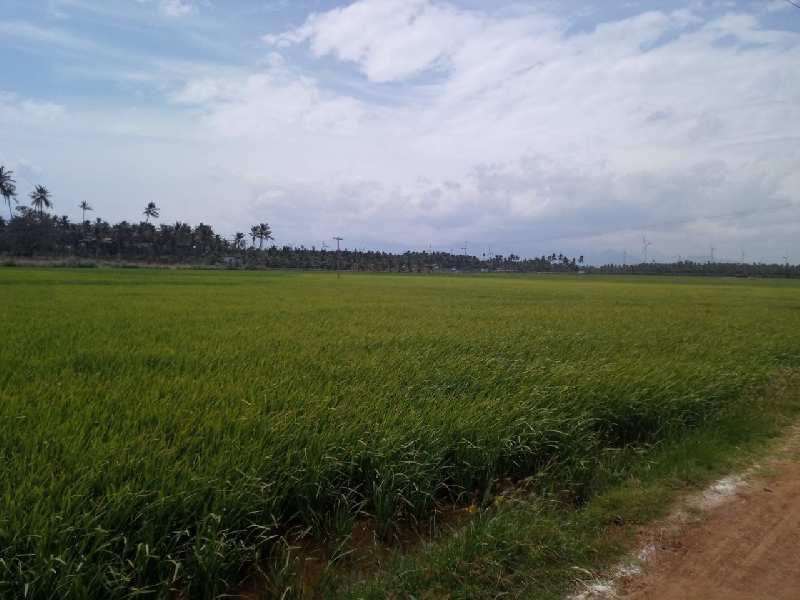 Agricultural/Farm Land for Sale in Achampudur, Tirunelveli