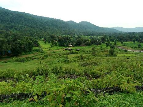Agriculture Land For Sale In Tenkasi, Tirunelveli