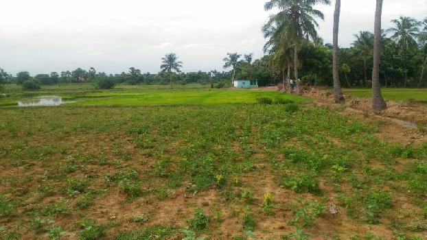 Agriculture Land For Sale In Tenkasi, Tirunelveli