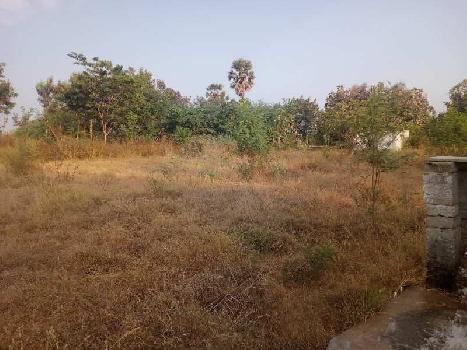 Agriculture Land For Sale In Tenkasi Road, Rajapalayam