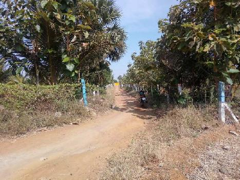 Agriculture Land For Sale In Tirunelveli ,Tamil Nadu