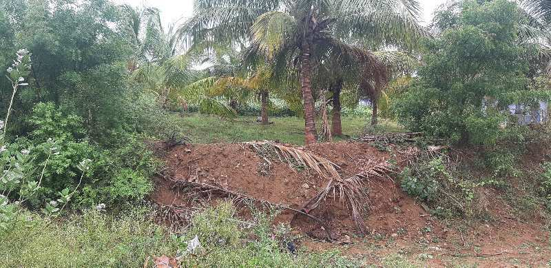Agriculture Land For Sale In Nearby Tenkasi Kadayanallur