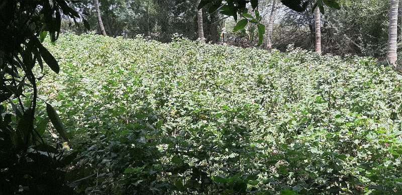 Agriculture Land For Sale In Mukkudal, Tirunelveli