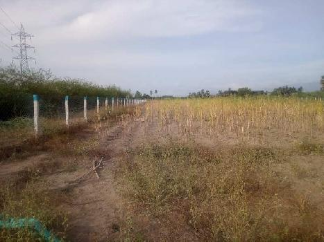 Agriculture Land For Sale In Tirunelveli, Tamil Nadu