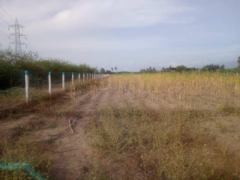 Agriculture Land For Sale In Tirunelveli, Tamil Nadu