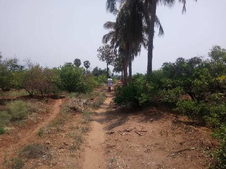 Agriculture Land For Sale In Tenkasi Hills Area, Tirunelveli