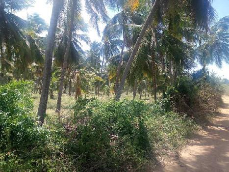 Agriculture Land For Sale In Western Hills Area Kadayanallur,Tenkasi, Tirunelveli, Tamil Nadu