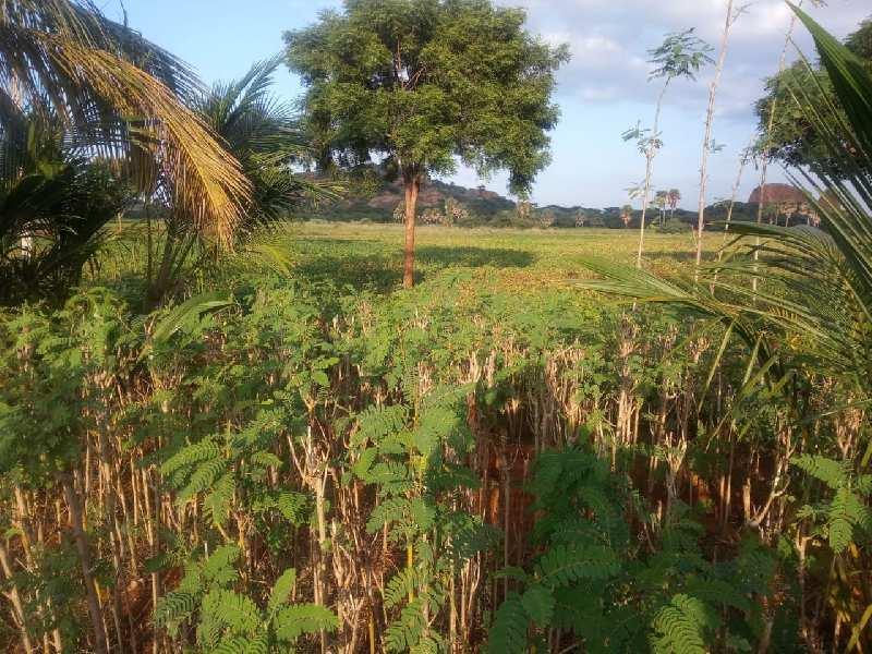 Agriculture Land For Sale In Sankarankovil, Tirunelveli