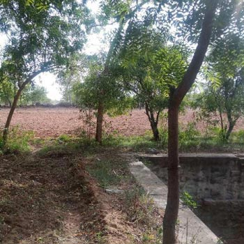 Agriculture Land For Sale In Melapalayam, Tirunelveli