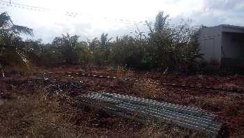 Agriculture Land For Sale In Nearby Kadayanallur,Tenkasi, Tirunelveli