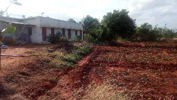 Agriculture Land For Sale In Nearby Kadayanallur,Tenkasi, Tirunelveli