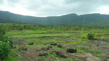 100 Acre Agricultural/Farm Land for Sale in Bali, Pali