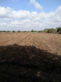 Agricultural/Farm Land for Sale in Junagadh
