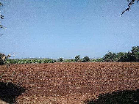 Agricultural/Farm Land for Sale in Gir Somnath