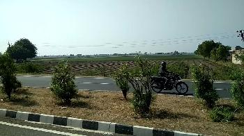 Agricultural/Farm Land for Sale in Gujarat