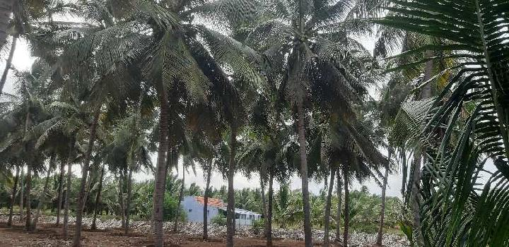 Pollachi taluk coconut farm land sales