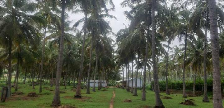 Coconut farm land&agriculture land ready sales