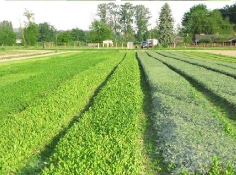 5.5 acres of agricultural land in Bawal