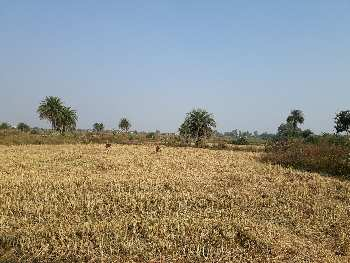 Agriculture Land in Bendri Village