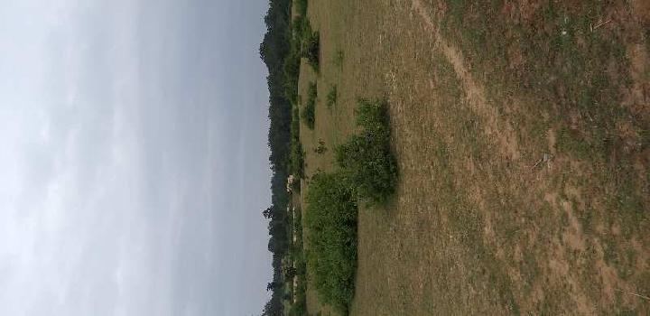 Agricultural/Farm Land for Sale in Barbaspur, Umaria